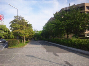 DSC_0179_1.JPG